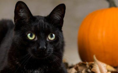 Le chat noir d'Halloween
