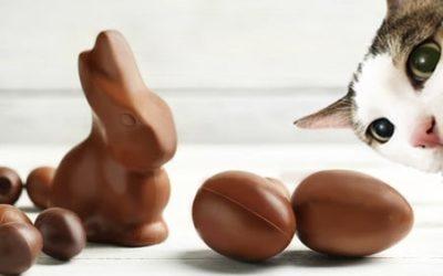 Chat et chocolat, attention danger mortel !
